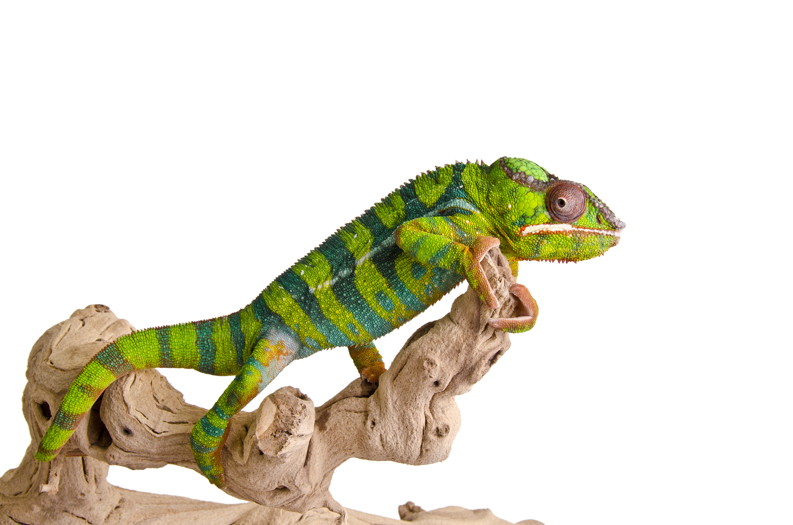reptile sitting on a piece of wood