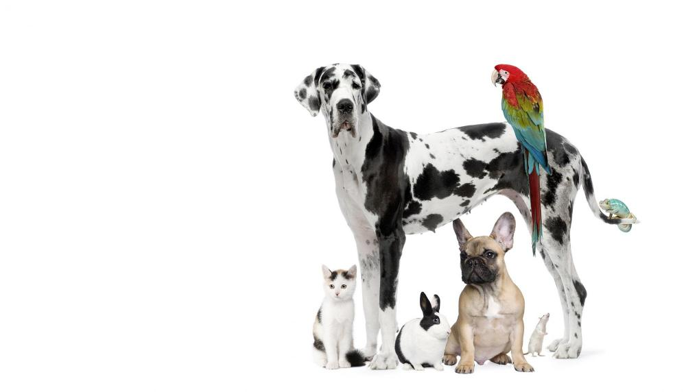Pet care services at sheehy animal hospital in Livonia, MI