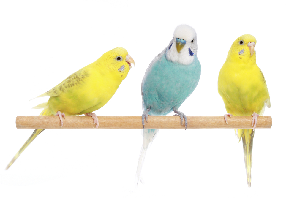 Birds and Exotic Pet Care